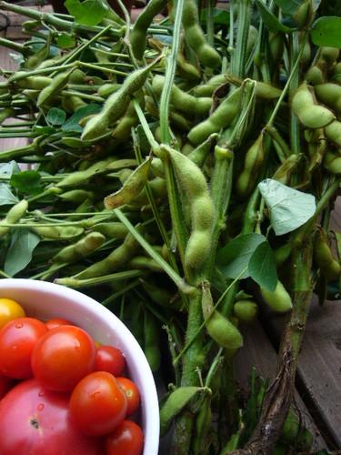 枝豆とトマト